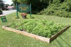 Margaretville wildflower garden July 20, 2020