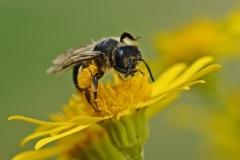 bee-web